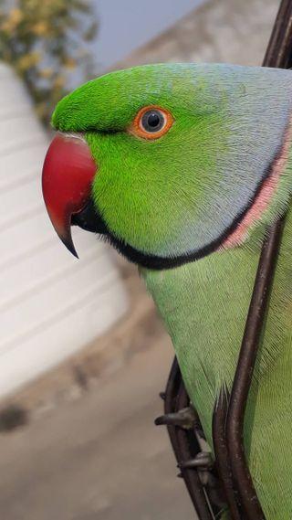 Обои на телефон попугай, птицы, любовь, love