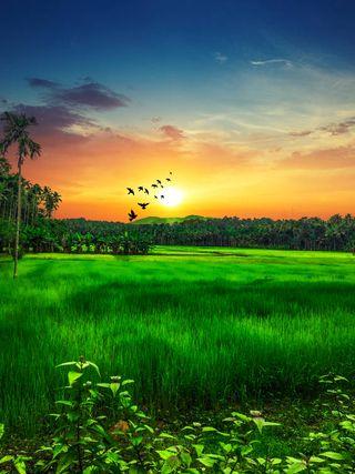 Обои на телефон land, paddy field, природа, зеленые, закат, поле