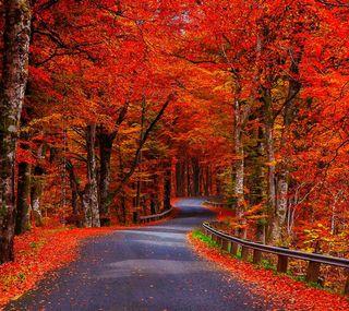 Обои на телефон цветные, осень, дорога