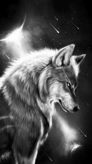 Обои на телефон волк, белые, white wolf, coyote