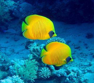 Обои на телефон подводные, тропические, рыби, океан, кораллы, reef