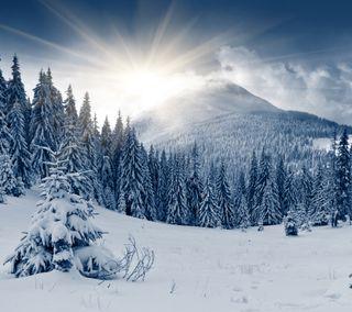 Обои на телефон холм, солнце, снег, лес, зима, дерево