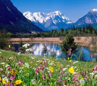 Обои на телефон озеро, цветы, природа, милые, лучшие, крутые, вид, nature best view, cute flowers, cool view