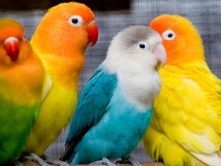 Обои на телефон птицы, попугаи, животные