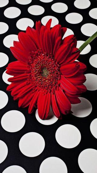 Обои на телефон цветы, красые