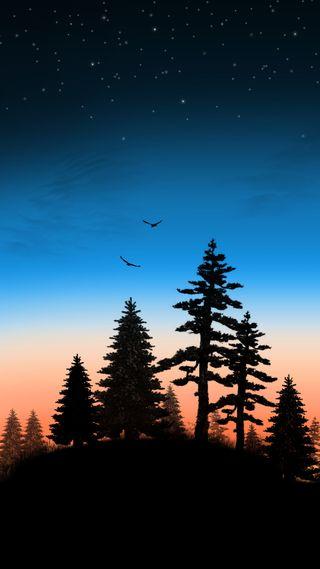 Обои на телефон холм, птицы, лес, закат, деревья, вечер, evening on a hill 2