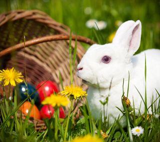 Обои на телефон яйца, кролики, христианские, праздник, пасхальные, кролик, весна