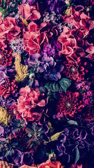 Обои на телефон цветы, природа, красочные, colorful flowers