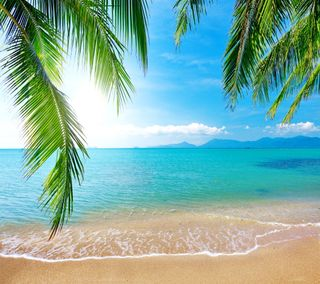 Обои на телефон песок, тропические, пляж, пальмы, океан, море, изумруд