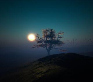 Обои на телефон солнце, свет, закат, дерево, sunset tree