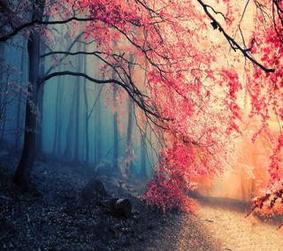 Обои на телефон природа, осень, лес, дерево