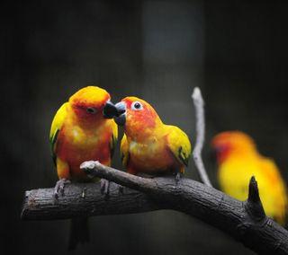 Обои на телефон навсегда, сердце, романтика, птицы, поцелуй, пара, обнимать, любовь, love birds, love