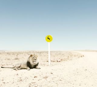 Обои на телефон пустыня, ожидание, лев