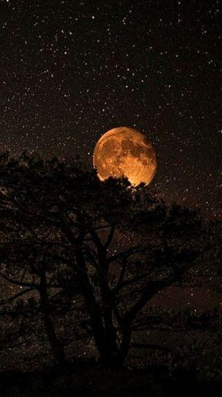 Обои на телефон природа, ночь, луна, full