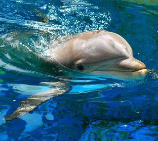 Обои на телефон рыба, дельфины, вода, pool
