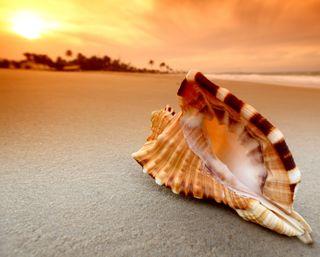 Обои на телефон тишина, раковина, пляж, песок, море, закат, восход