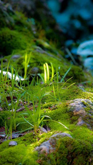 Обои на телефон трава, лес, кровать, зеленые, moss, forrest, bed of moss