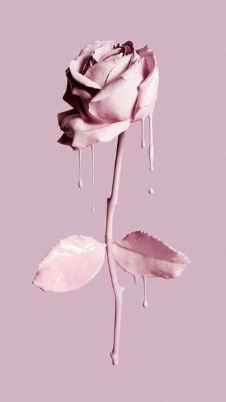 Обои на телефон love, pink pastel petal, любовь, милые, розовые, розы, девчачие, птицы, пастельные