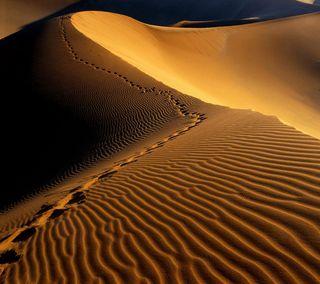 Обои на телефон пустыня, песок, африка, namibia, footprints, dunes