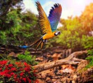 Обои на телефон птицы, попугай, желтые, синие