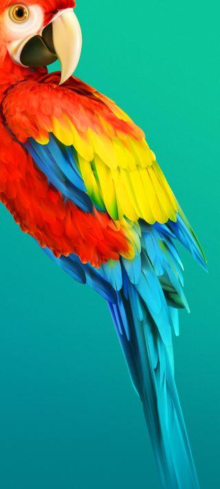 Обои на телефон попугай, панч, отверстие, punch hole wallpaper