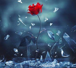 Обои на телефон розы, любовь, красые, shall, love shall overcome, love