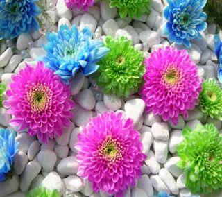 Обои на телефон цветы, приятные, новый, крутые, красочные, камни, камешки, вид, hd, 2013