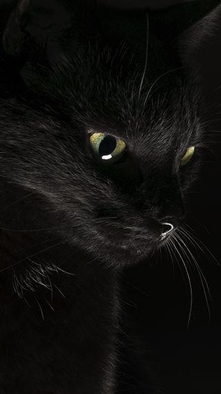 Обои на телефон коты, черные, кошки