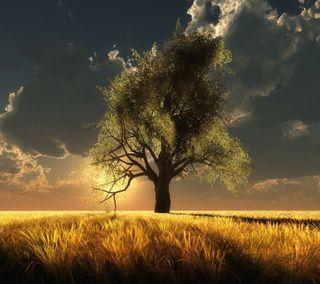 Обои на телефон естественные, приятные, природа, поле, пейзаж, облака, новый, небо, дерево, hd