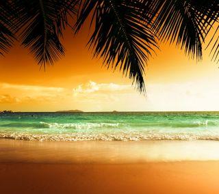 Обои на телефон пальмы, тропические, тропики, прекрасные, пляж, море, закат, вода