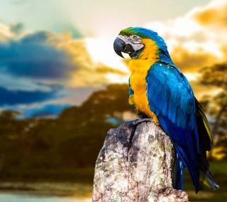 Обои на телефон попугай, цветные, фото, природа, пейзаж, красочные, colorful parrot