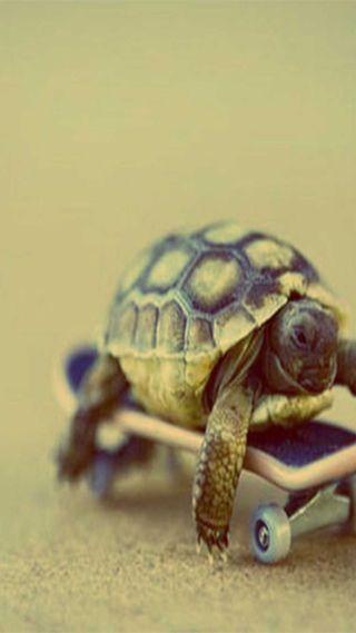 Обои на телефон черепаха, slow