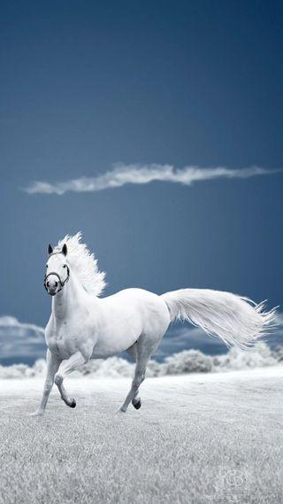 Обои на телефон лошади, лошадь, животные, белые, бег, white horse, hd
