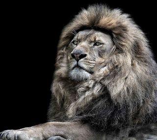 Обои на телефон постер, лев, коты, король, lion poster