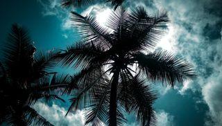 Обои на телефон шри ланка, черные, цветные, темные, синие, природа, деревья, дерево, coconuttree, coconut