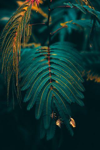 Обои на телефон флора, дерево, темные, настроение, листья, лес, зеленые, европа, блеклые, vithurshan.jpeg, vithurshan, moody, forest flora, Vithurshan, Forest