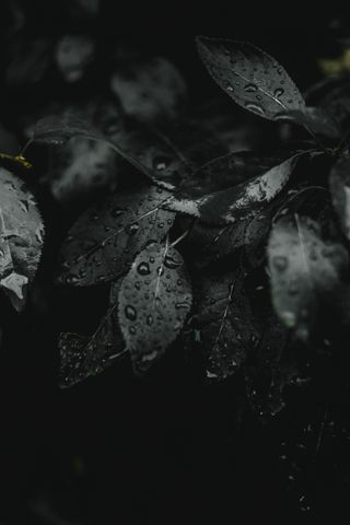 Обои на телефон трава, листья