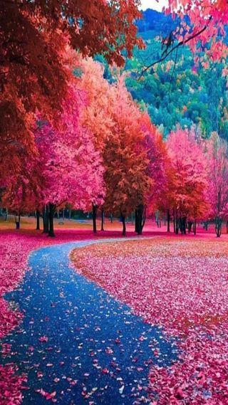 Обои на телефон осень, природа, парк, листья