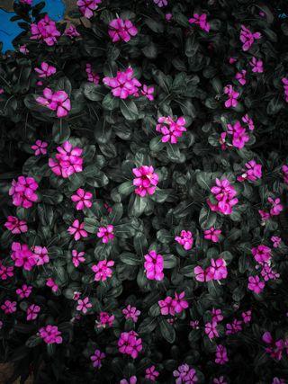 Обои на телефон сад, цветы, маргаритка