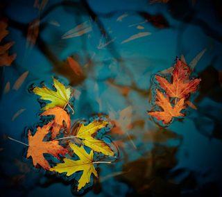 Обои на телефон упавший, мертвый, темные, природа, осень, листья, вода, float, fallen leaves