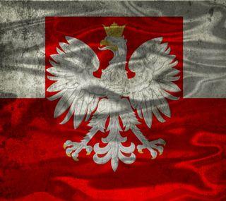 Обои на телефон орел, флаг, польша, красые, белые, polska, polish