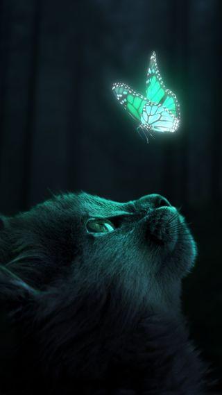 Обои на телефон хасака, креативные, фантазия, темные, сюрреалистичный, светящиеся, ночь, милые, лес, кошки, котята, животные, дизайн, графические, бабочки, surreal wallpaper, stares, mesmerizing, graphic design, glowing butterfly, firefly, fantasy wallpaper, dark wallpaper, cute wallpaper, cat wallpaper, Glowing