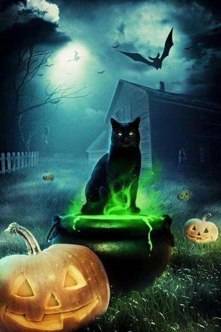 Обои на телефон летучая мышь, черные, хэллоуин, ужасные, кошки, pumkin, halloween favorites