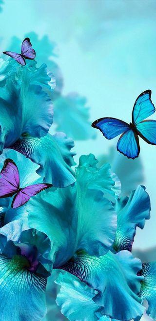 Обои на телефон симпатичные, цветы, цветочные, синие, прекрасные, орхидеи, бирюзовые, бабочки, teal orchids