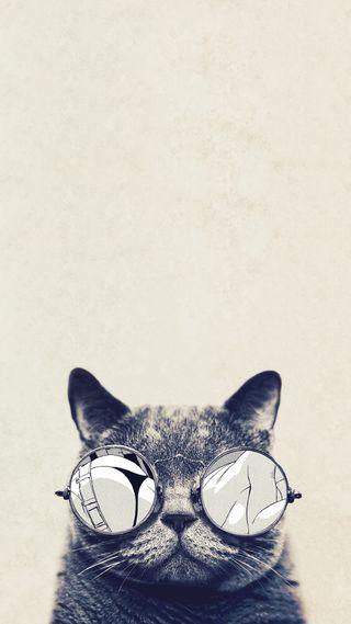 Обои на телефон очки, кошки, милые