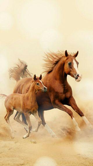 Обои на телефон пони, милые, лошадь, лошади, красота, животные