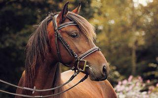 Обои на телефон лошади, лошадь, гоночные