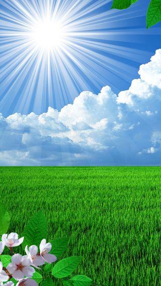 Обои на телефон трава, цветы, солнце, природа, поле, облака, листья, весна