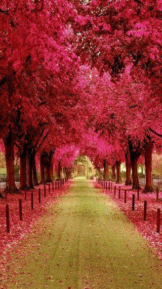 Обои на телефон улица, розовые, деревья