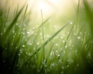 Обои на телефон солнечный свет, трава, природа, капли дождя, капли воды, боке